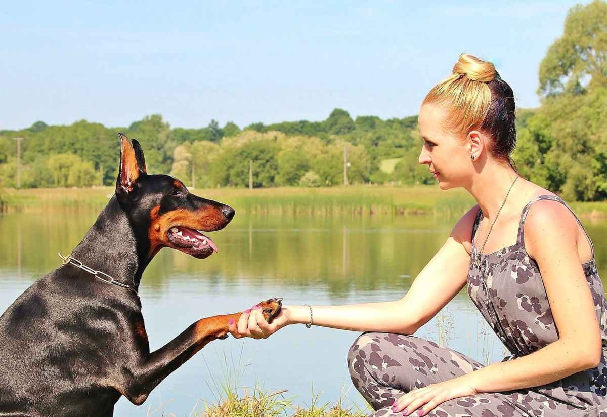 Outside of Dog/Human Relationships, Does Loyalty StillExist?